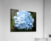 Hydrangea  Impression acrylique