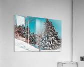 Snowy Pine Trees  Acrylic Print
