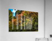 Nature in Fall  Acrylic Print