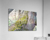DSC_0223  Acrylic Print