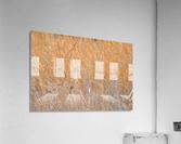 Golden Field  Acrylic Print