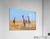 Sortie de famille  Acrylic Print
