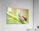 Snail on green stem  Acrylic Print