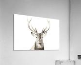 Cerf rouge  Acrylic Print