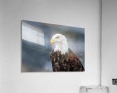 Portrait of an Eagle  Acrylic Print