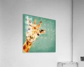 Girafeau  Acrylic Print