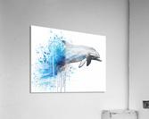 dauphin  Acrylic Print