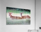 TwoFawns  Acrylic Print