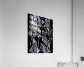 Indestructible Transformation Of Life  Acrylic Print