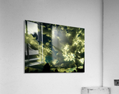 sofn-F3903ACE  Acrylic Print