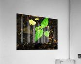 sofn-16FB61B2  Acrylic Print
