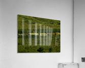 sofn-AB81F9D3  Acrylic Print