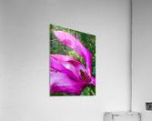 Peaceful pink   Impression acrylique