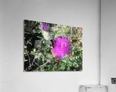 Bug Heaven  Acrylic Print