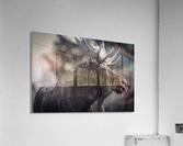 Moose Portrait - 2  Acrylic Print