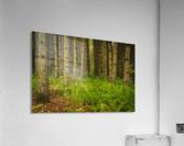 _S9A1813 Modifier  Acrylic Print