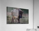_49R0234 2  Acrylic Print