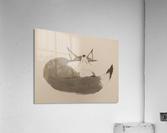 Gray Fox Looking to the Skies  Acrylic Print