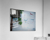Real Kitty Hunting The Macaws  Acrylic Print