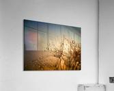 Tender is the Night  Acrylic Print