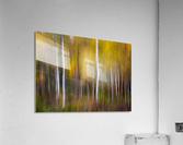 Abstract Fall  Acrylic Print