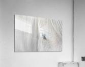 Whisper of Iceland  Acrylic Print