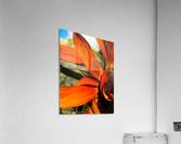 Sunflower   Impression acrylique