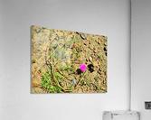 Flower16  Acrylic Print