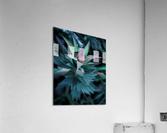Funky flora  Acrylic Print