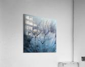Teardrops  Acrylic Print