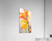 Heavenly birches  Acrylic Print