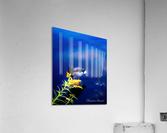 So simple Blue   Impression acrylique