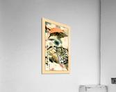 Papillon chinois   Acrylic Print