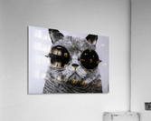 The Cat with glasses  Acrylic Print