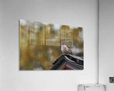 DSC_0026  Acrylic Print