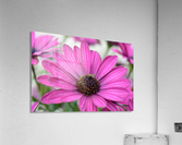 Purple Flower Photograph  Acrylic Print