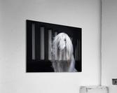 Afghan Hound Portrait  Acrylic Print