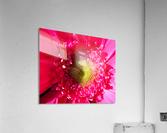 20190112 IMG_3100 2  Acrylic Print