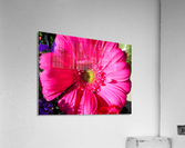 20190112 IMG_3100  Acrylic Print