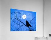 20190221 IMG_3305 2  Acrylic Print