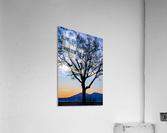 20190101 DSC_0107  Acrylic Print