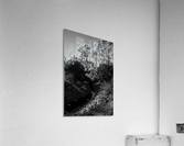 20190316 DSC_0136 2  Acrylic Print