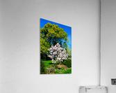 20190316 DSC_0146  Acrylic Print
