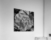 20190403_135548  Acrylic Print