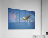 Egret Flying  Acrylic Print
