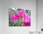 Flowers (47)  Acrylic Print