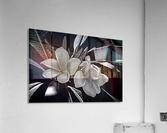 Plumeria In Black And White  Acrylic Print