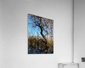 Bow Park duck pond  Acrylic Print
