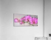 IMG_0281_e_WS  Acrylic Print