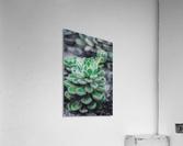 Sweetyplant  Acrylic Print